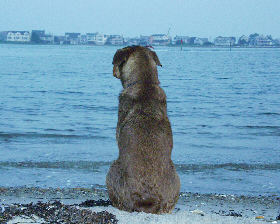 Dog on the beach. Photo
