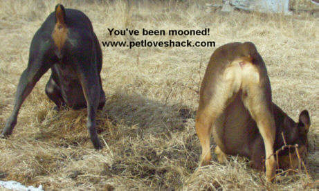 You've been mooned!