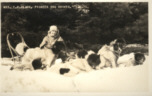 Sled Dogs Photo, Postcard